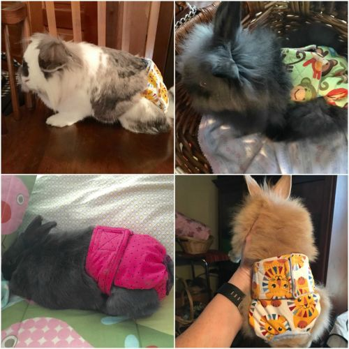 bunnydiapers collage 2